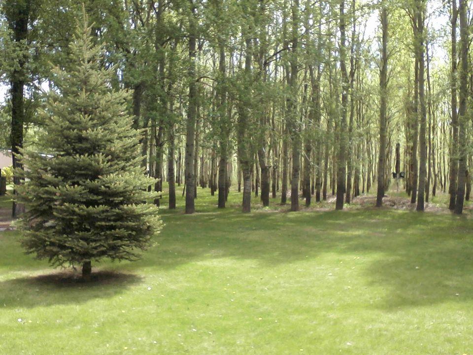 Terrazas En El Bosque
